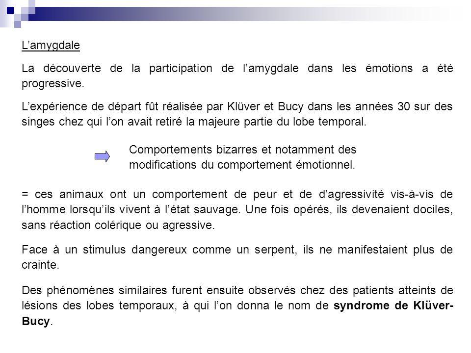 Lamygdale La découverte de la participation de lamygdale dans les émotions a été progressive.