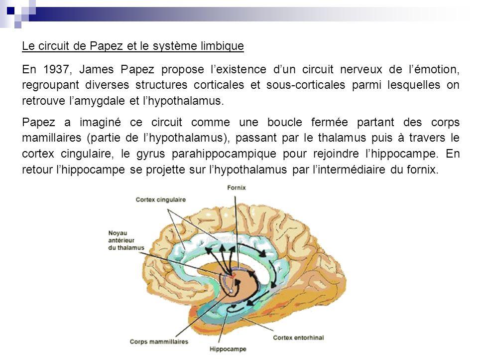 Le circuit de Papez et le système limbique En 1937, James Papez propose lexistence dun circuit nerveux de lémotion, regroupant diverses structures corticales et sous-corticales parmi lesquelles on retrouve lamygdale et lhypothalamus.