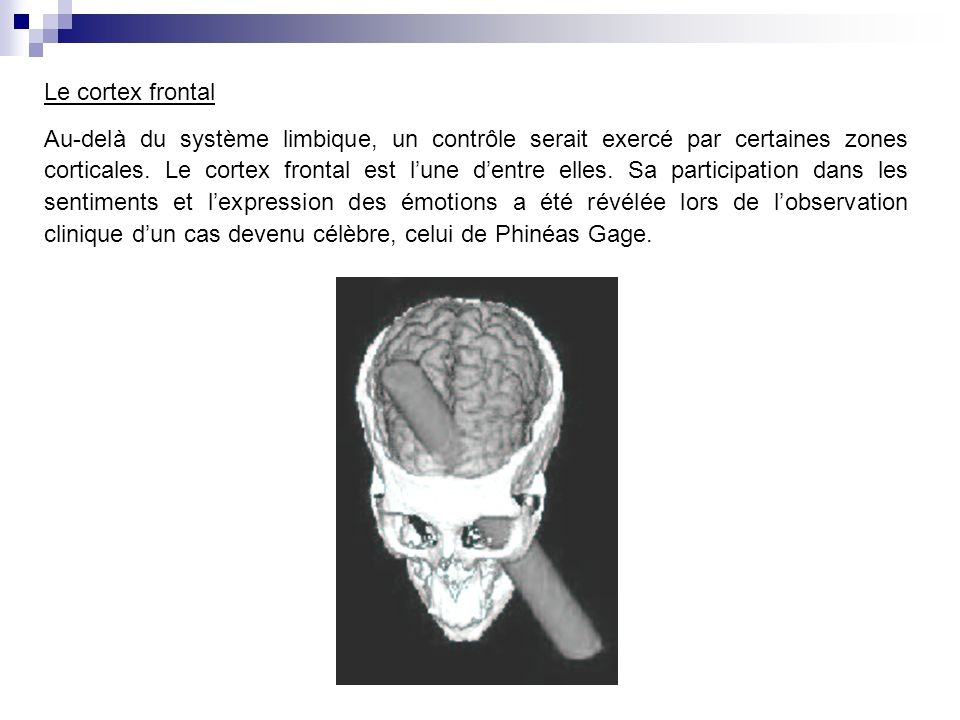 Le cortex frontal Au-delà du système limbique, un contrôle serait exercé par certaines zones corticales.