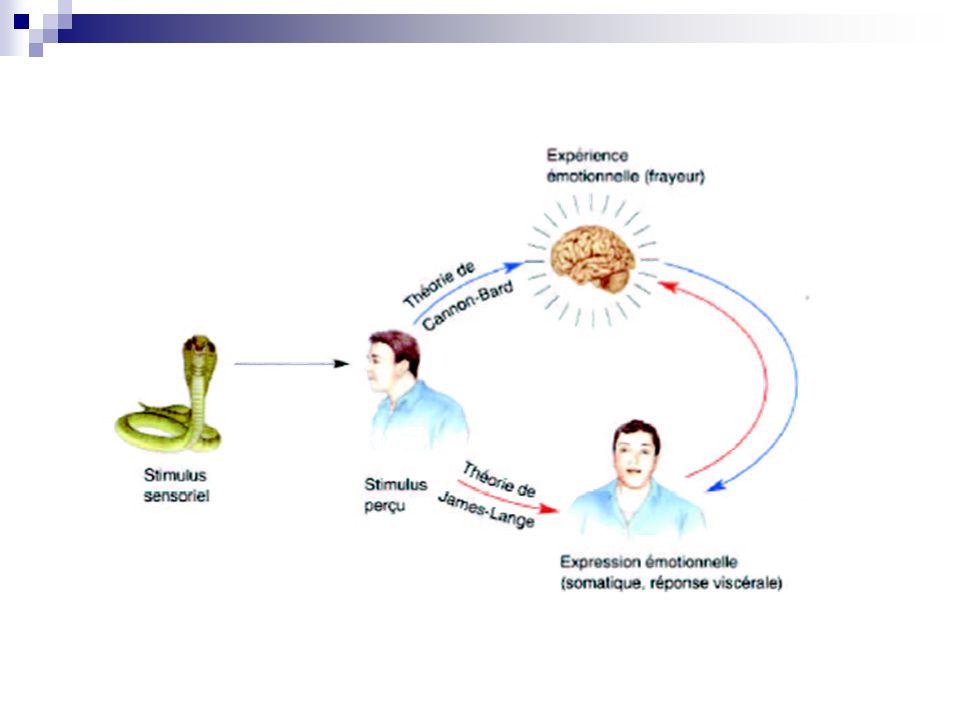 3ème approche = la théorie de Stanley Schachter et Jérôme Singer Dans les années 60-70, devant lopposition des 2 précédentes théories et lémergence des sciences cognitives, Schachter et Singer proposent que les individus interprètent les réactions corporelles engendrées par le stimulus émotionnel en fonction de leur expérience et du contexte situationnel.