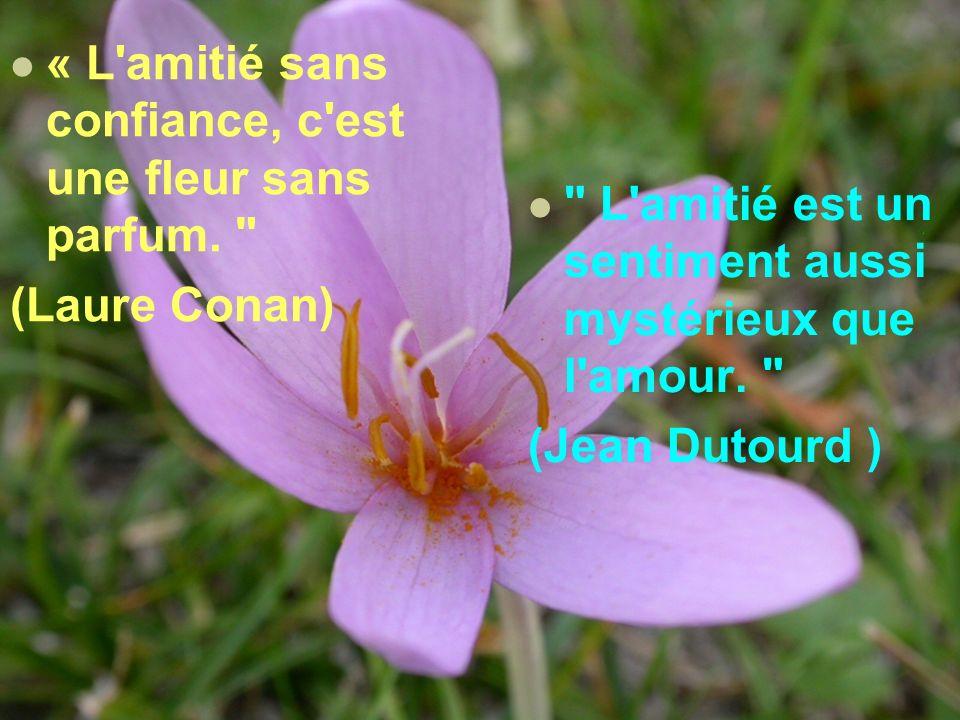 LAMITIÉ - Citations célèbres -