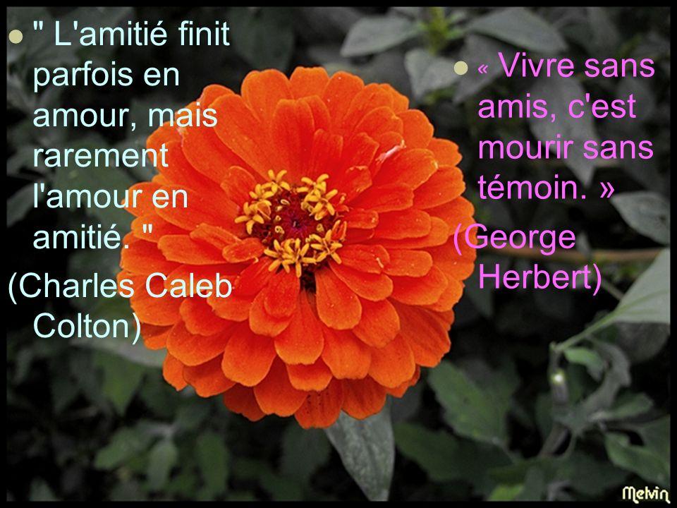 « L amitié sans confiance, c est une fleur sans parfum.