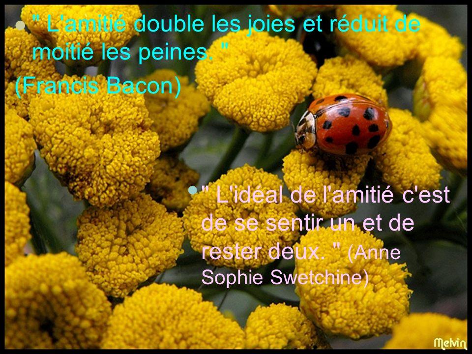 Bibliographie Sitographie: 1.Flore sauvage :http://fr.images.search.yahoo.com;2.Citations sur lamtie:http://fr.search.yahoo.com; Réalisation: Aura Stef.