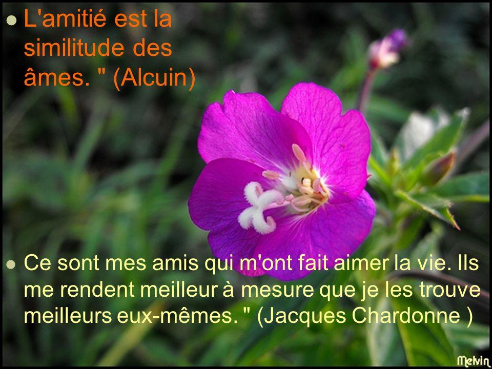 L amitié est la similitude des âmes. (Alcuin) Ce sont mes amis qui m ont fait aimer la vie.