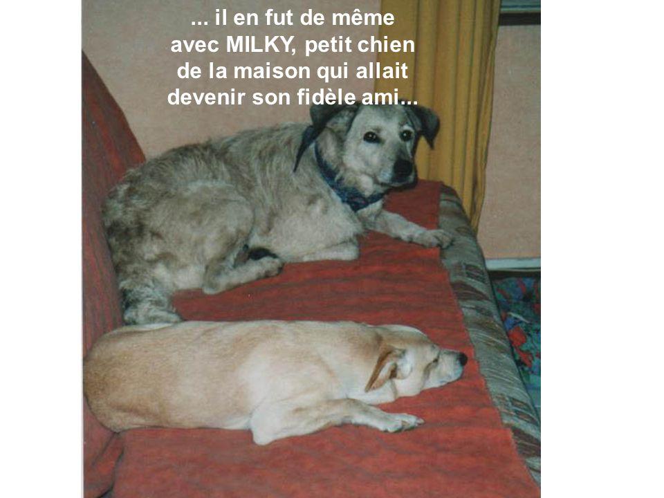 ... il en fut de même avec MILKY, petit chien de la maison qui allait devenir son fidèle ami...