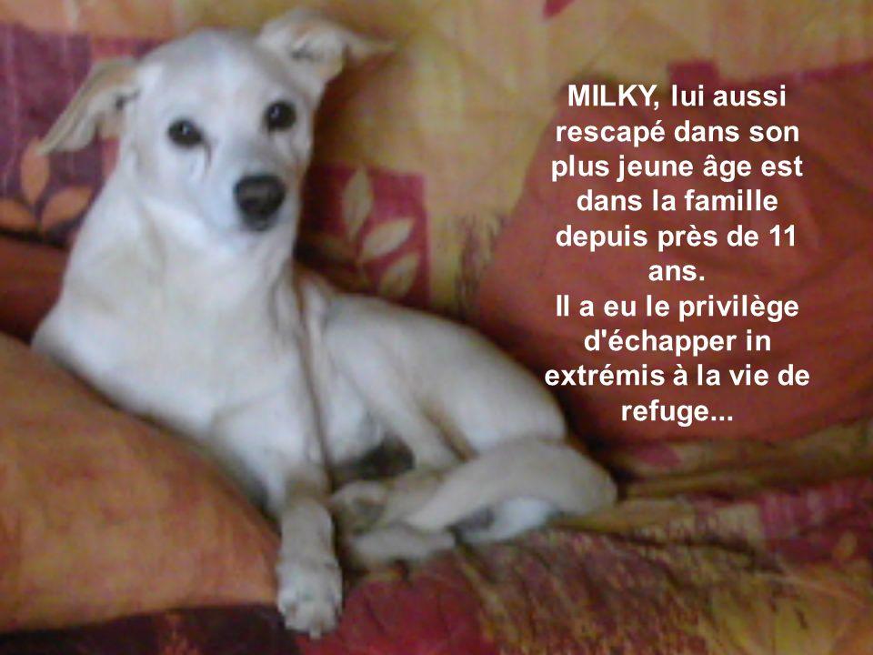 MILKY, lui aussi rescapé dans son plus jeune âge est dans la famille depuis près de 11 ans.
