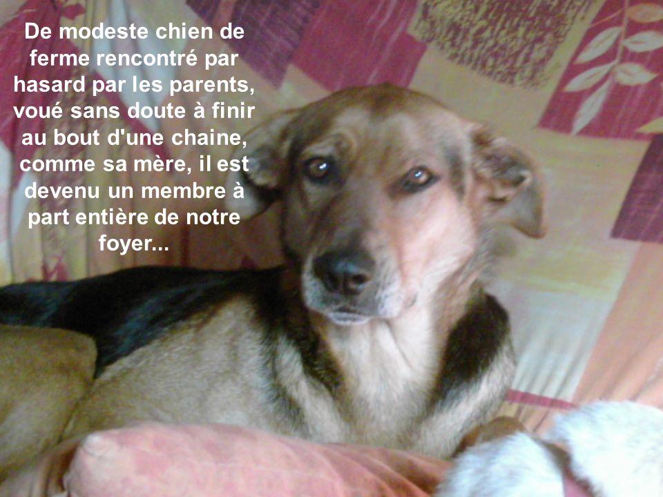 De modeste chien de ferme rencontré par hasard par les parents, voué sans doute à finir au bout d une chaine, comme sa mère, il est devenu un membre à part entière de notre foyer...