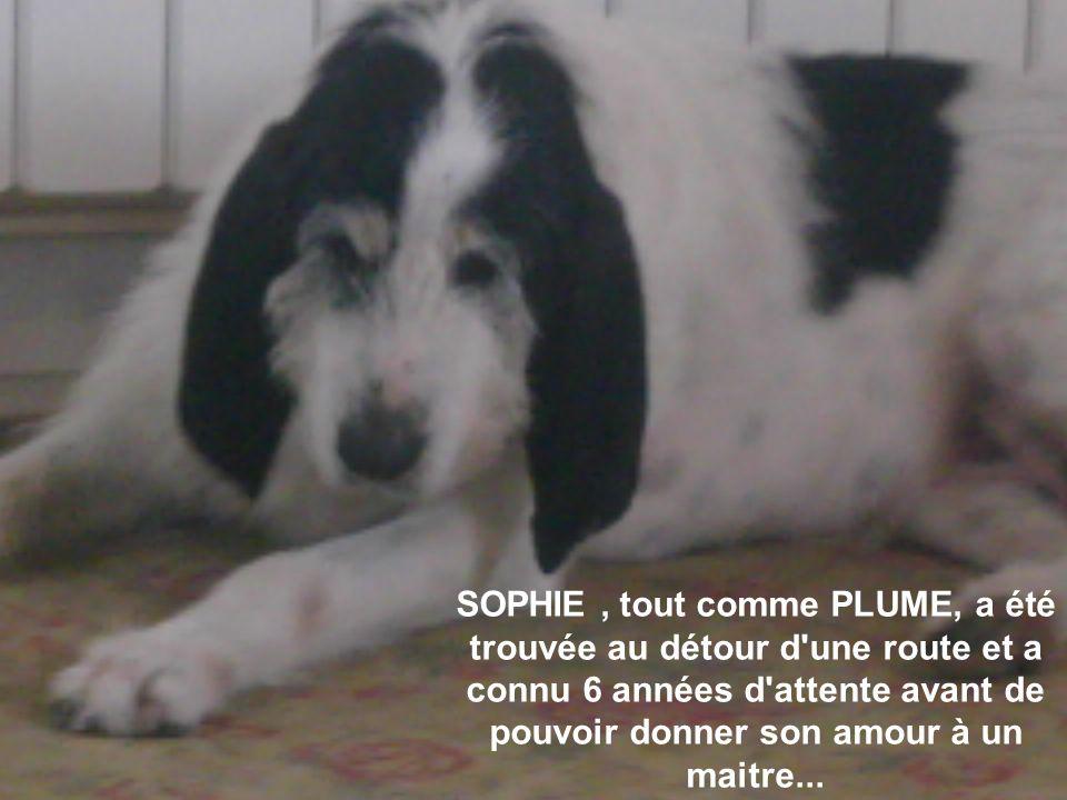 SOPHIE, tout comme PLUME, a été trouvée au détour d une route et a connu 6 années d attente avant de pouvoir donner son amour à un maitre...