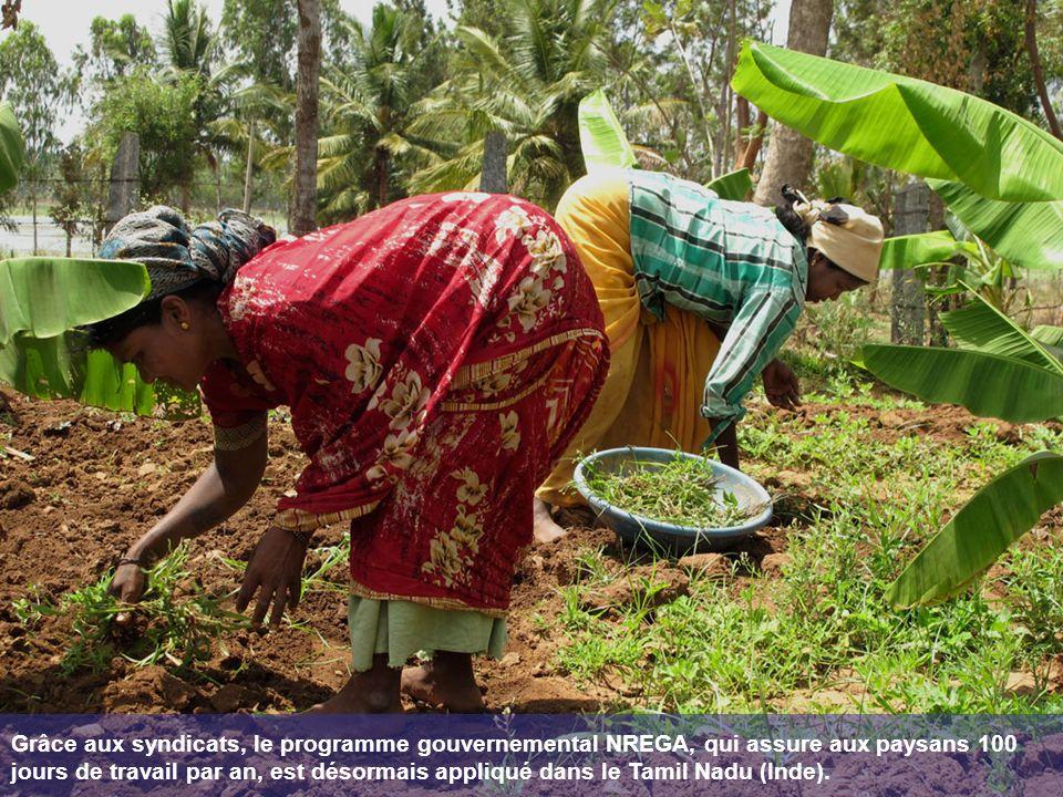 Grâce aux syndicats, le programme gouvernemental NREGA, qui assure aux paysans 100 jours de travail par an, est désormais appliqué dans le Tamil Nadu (Inde).