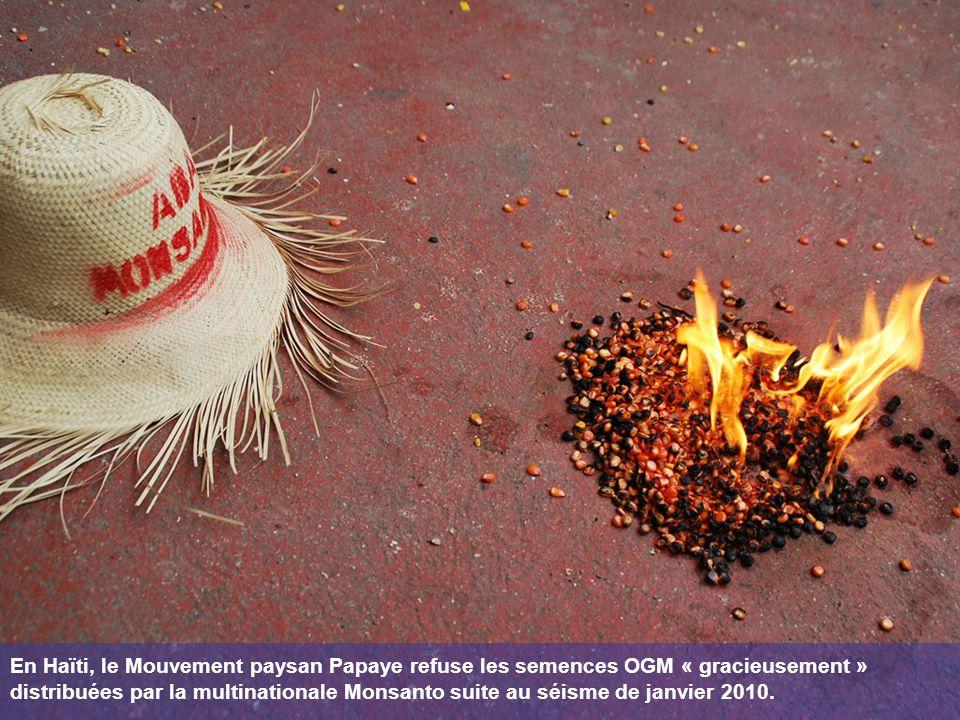 En Haïti, le Mouvement paysan Papaye refuse les semences OGM « gracieusement » distribuées par la multinationale Monsanto suite au séisme de janvier 2010.