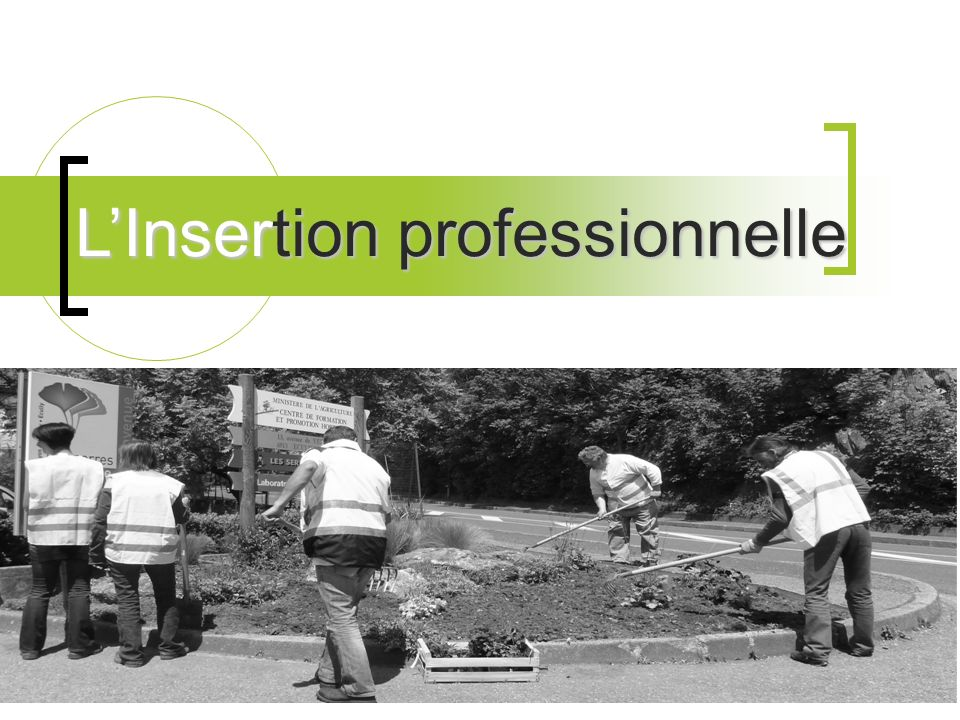 LInsertion professionnelle
