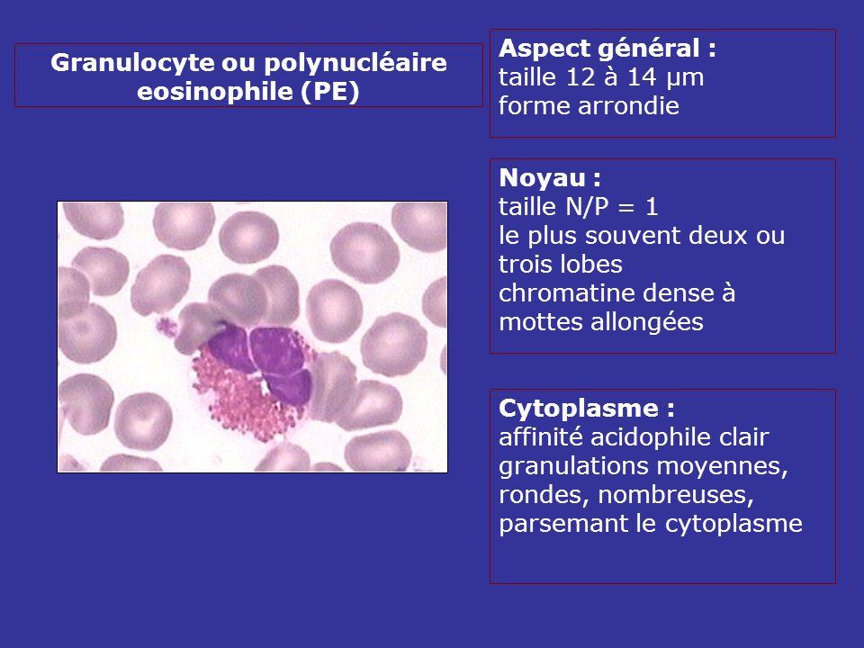 Aspect général : taille 12 à 14 µm forme arrondie Noyau : taille N/P = 1 le plus souvent deux ou trois lobes chromatine dense à mottes allongées Cytoplasme : affinité acidophile clair granulations moyennes, rondes, nombreuses, parsemant le cytoplasme Granulocyte ou polynucléaire eosinophile (PE)