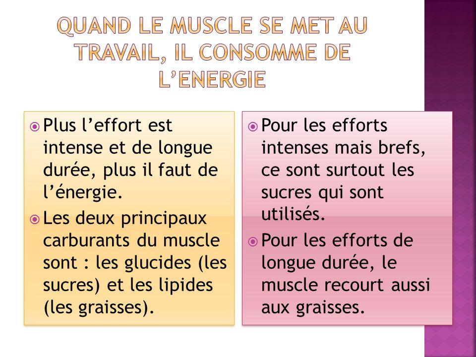 Par une alimentation EQUILIBREE & ADAPTEE. Pour MIEUX nourrir les muscles sollicités.