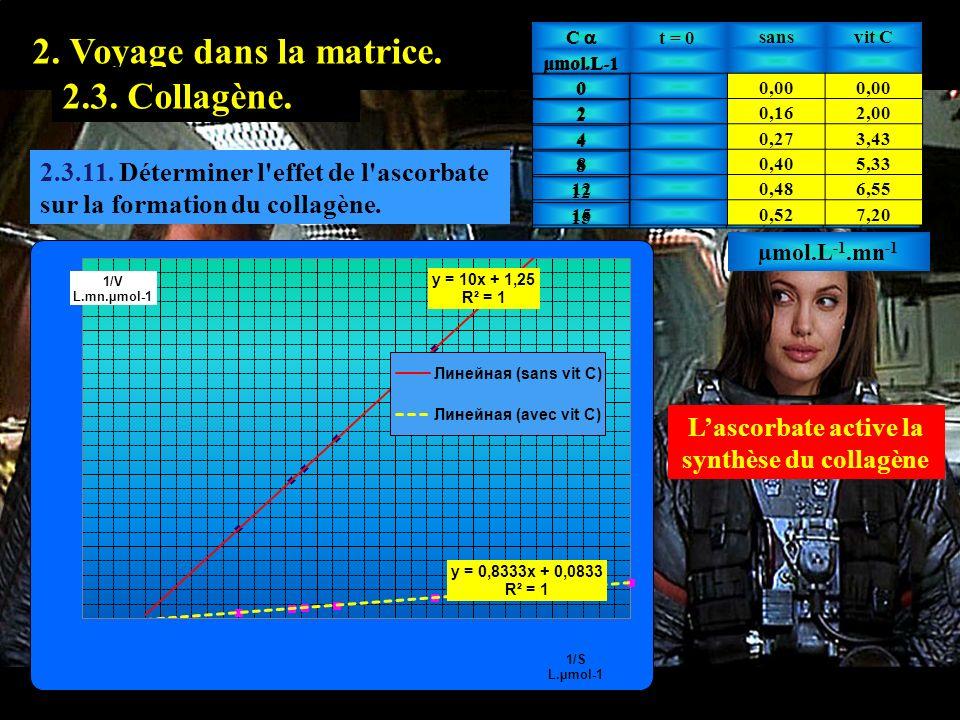 2.3.11 1. Prologue. 2. Voyage dans la matrice. 2.2. Hyaluronate.2.3. Collagène. 2.3.11. Déterminer l'effet de l'ascorbate sur la formation du collagèn