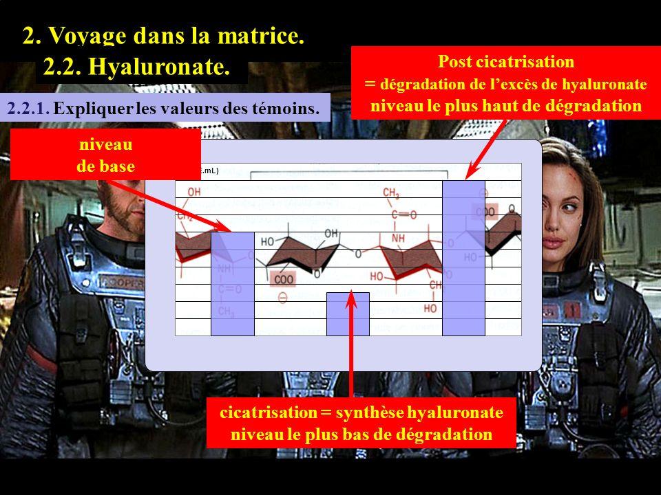 2.2.1 1. Prologue. 2. Voyage dans la matrice. 2.2. Hyaluronate. 2.2.1. Expliquer les valeurs des témoins. niveau de base cicatrisation = synthèse hyal