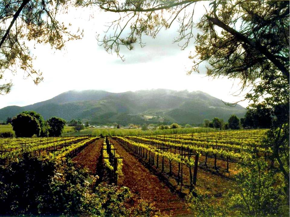 Moi, je suis la vraie vigne, et mon Père est le vigneron.