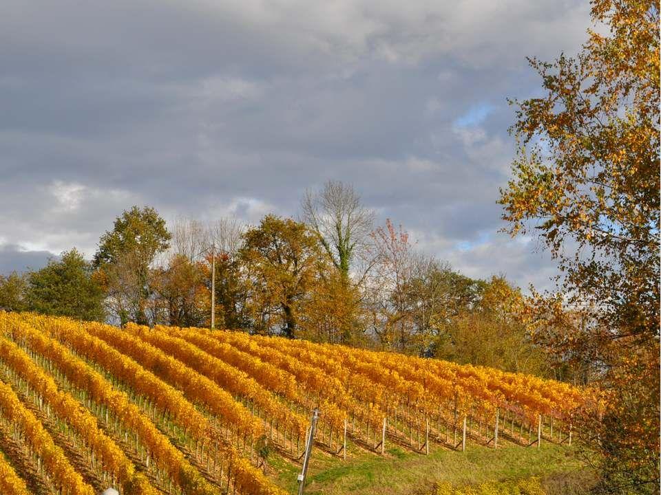 Nous comprenons mieux cette admirable image de la vigne, même si nous ne sommes pas viticulteurs.