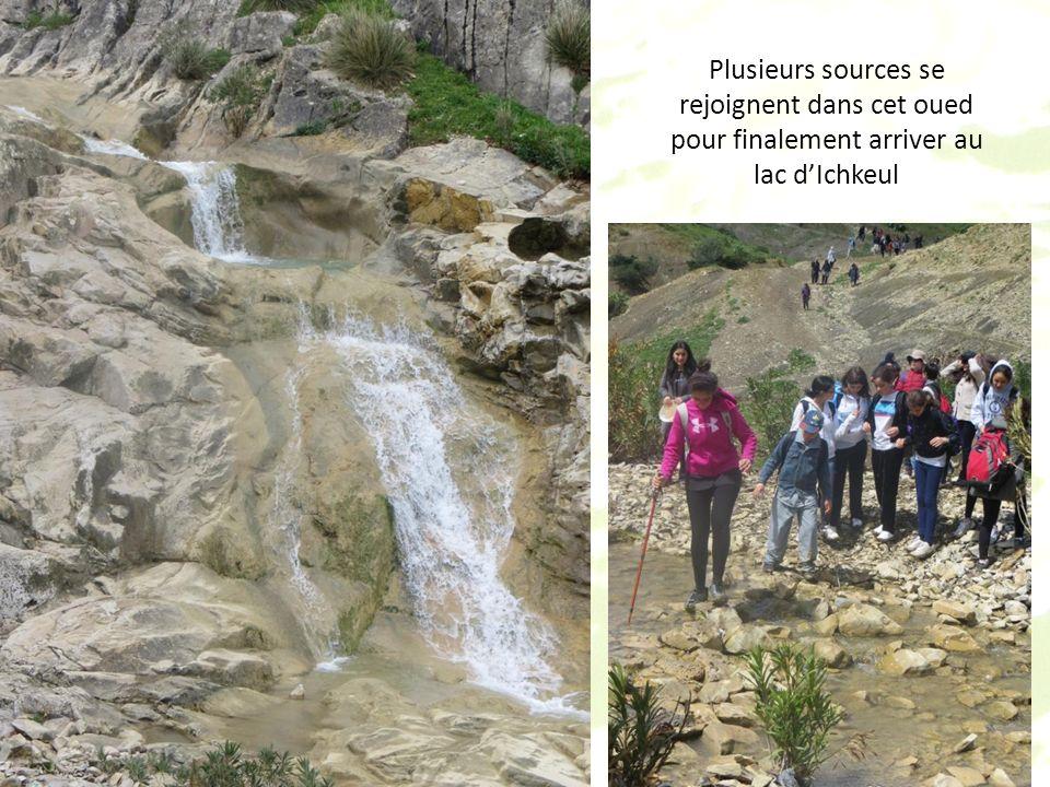 LOued Zitoun se trouve dans un petit village de la basse vallée de la Medjerda, Edaouadha, entre Mateur et Sejnane (nord-ouest de la Tunisie).