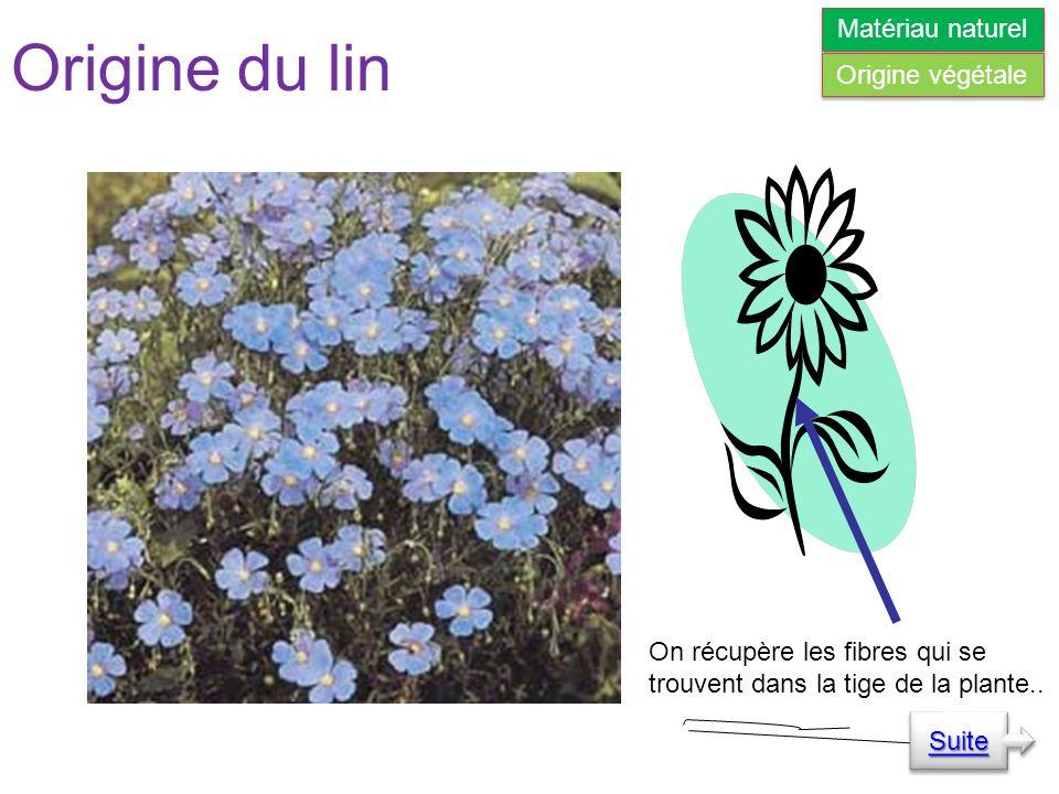 Origine du lin On récupère les fibres qui se trouvent dans la tige de la plante..