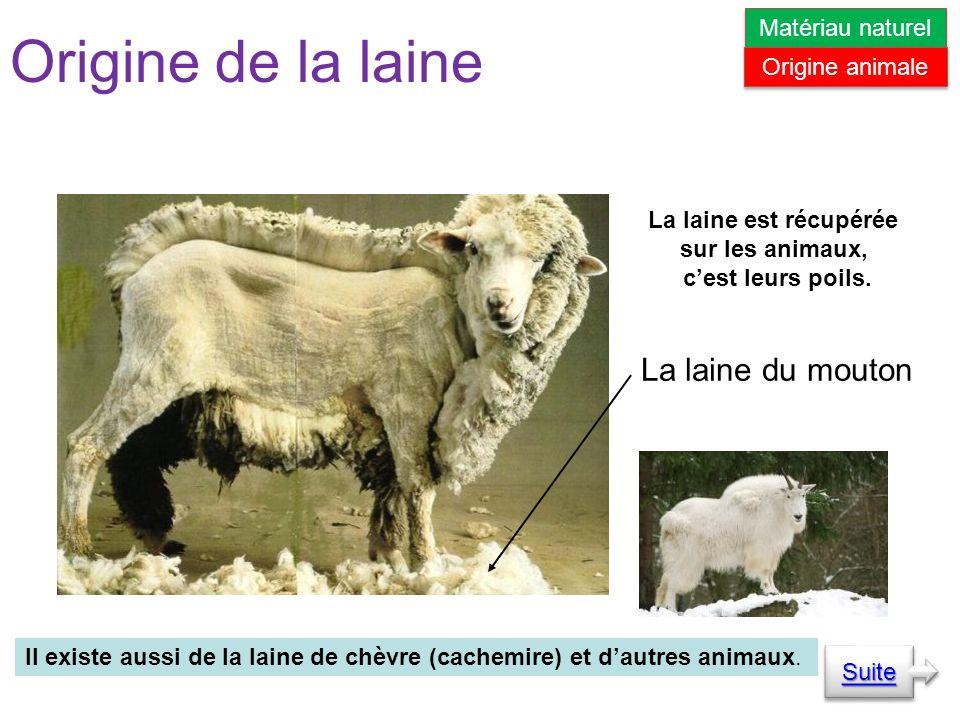 Origine de la laine Il existe aussi de la laine de chèvre (cachemire) et dautres animaux.