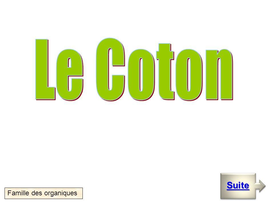 Le coton Suite Famille des organiques