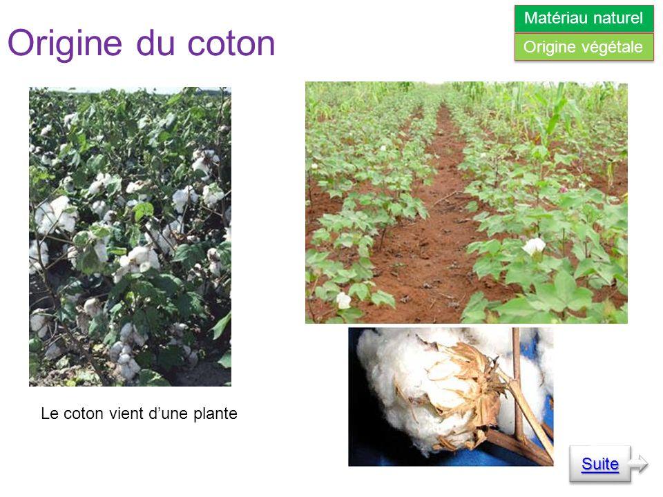 Origine du coton Le coton vient dune plante Suite Matériau naturel Origine végétale