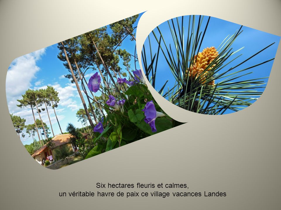 Six hectares fleuris et calmes, un véritable havre de paix ce village vacances Landes