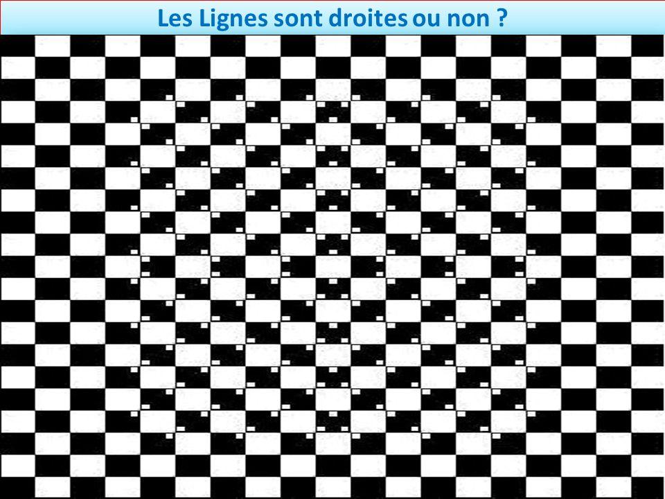 Les Lignes sont droites ou non ?