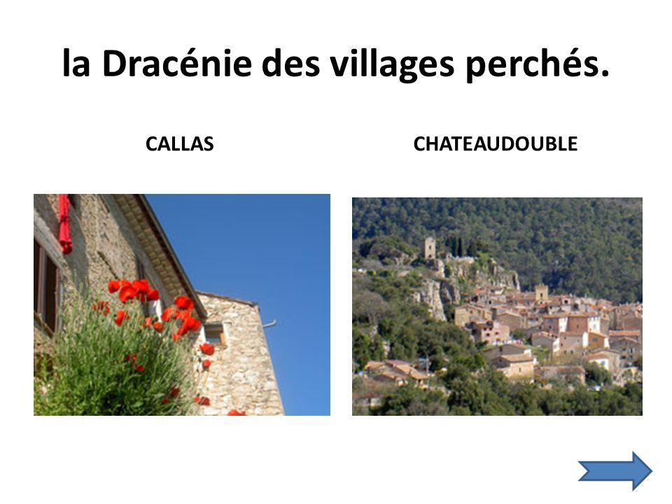 la Dracénie des villages perchés. CALLAS CHATEAUDOUBLE