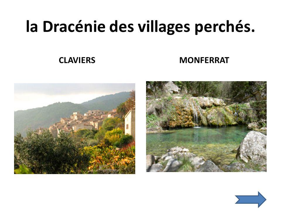 la Dracénie des villages perchés. CLAVIERS MONFERRAT