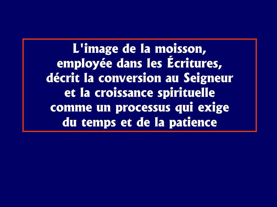 L'image de la moisson, employée dans les Écritures, décrit la conversion au Seigneur et la croissance spirituelle comme un processus qui exige du temp