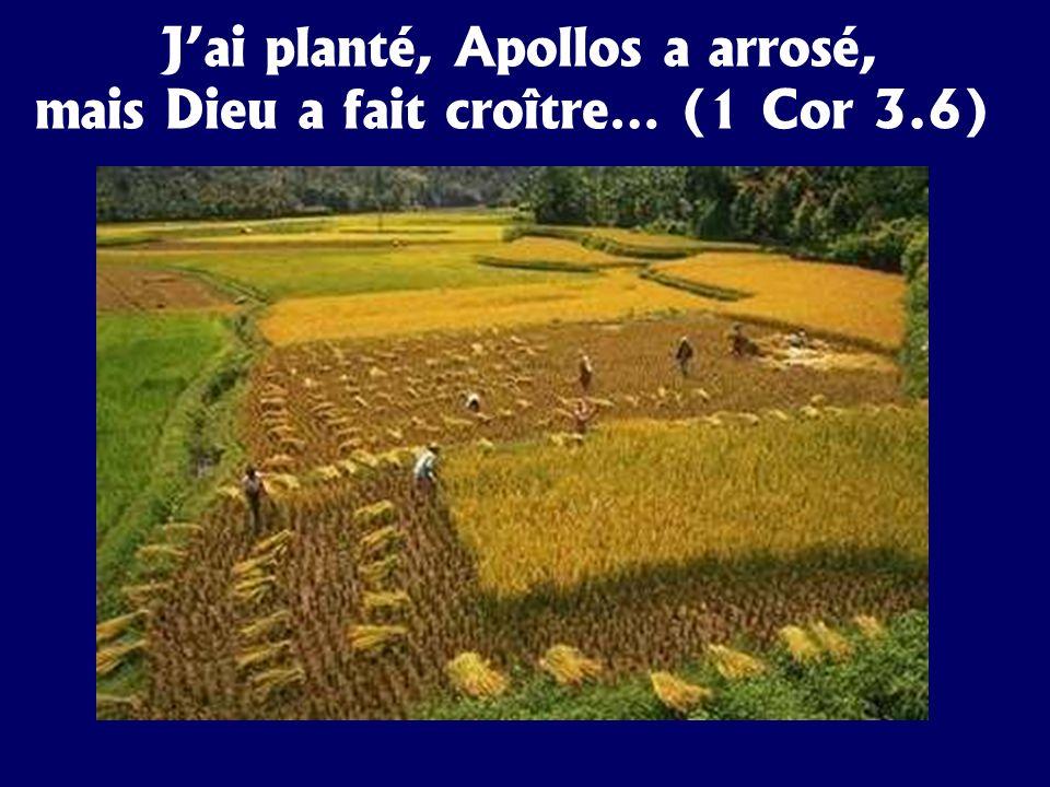 Jai planté, Apollos a arrosé, mais Dieu a fait croître… (1 Cor 3.6)