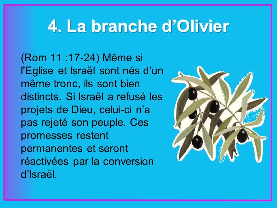 (Rom 11 :17-24) Même si lEglise et Israël sont nés dun même tronc, ils sont bien distincts.