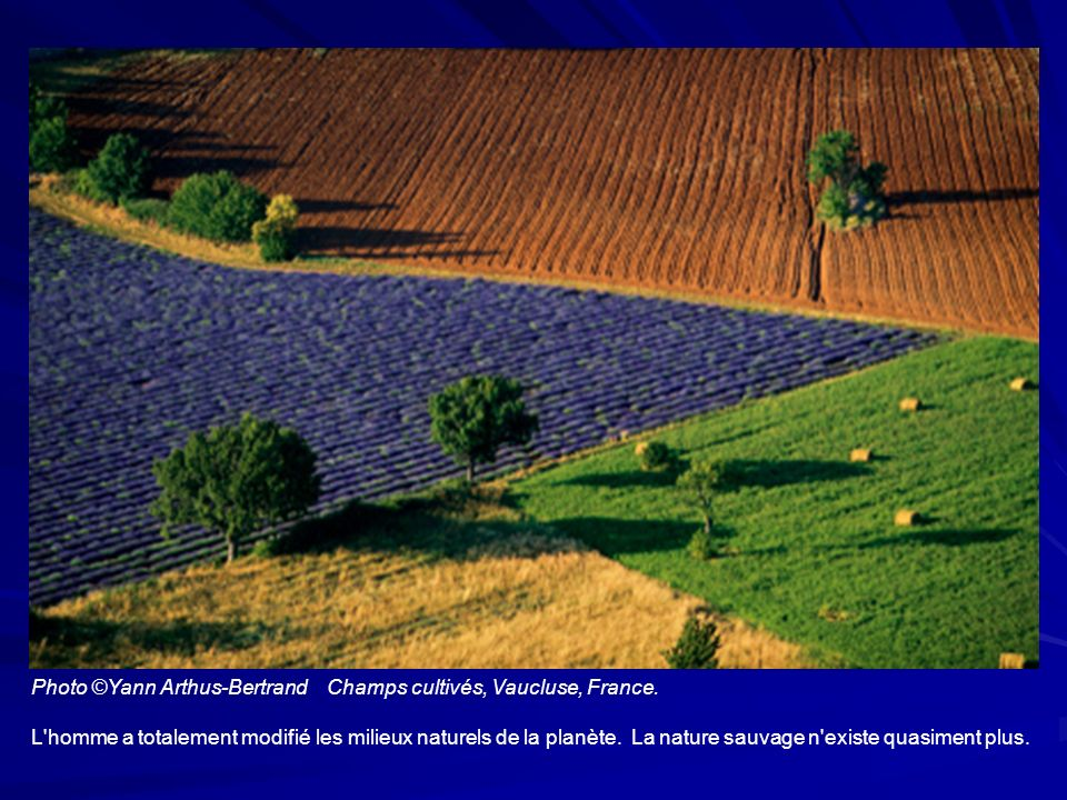 Photo ©Yann Arthus-Bertrand Champs cultivés, Vaucluse, France.