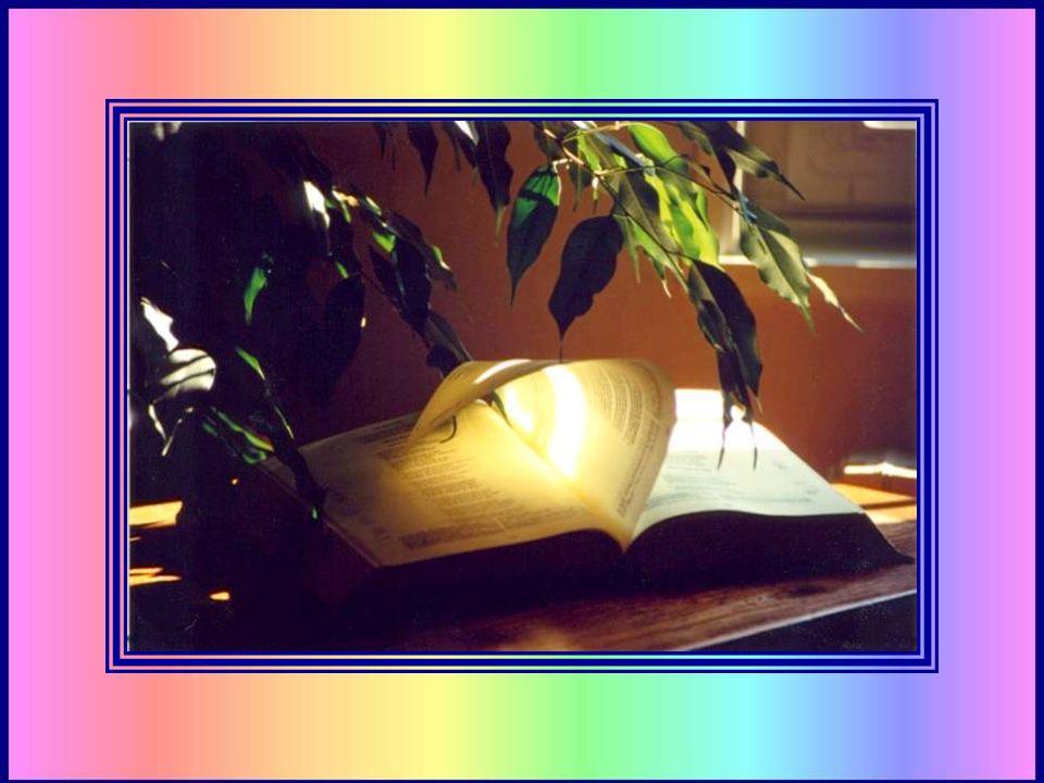 - Un gros livre. - Hum… Les livres, cest comme les gens, il y a lapparence, et ce quils contiennent ! que contient la Bible ? - La vie de Jésus ? - Ou
