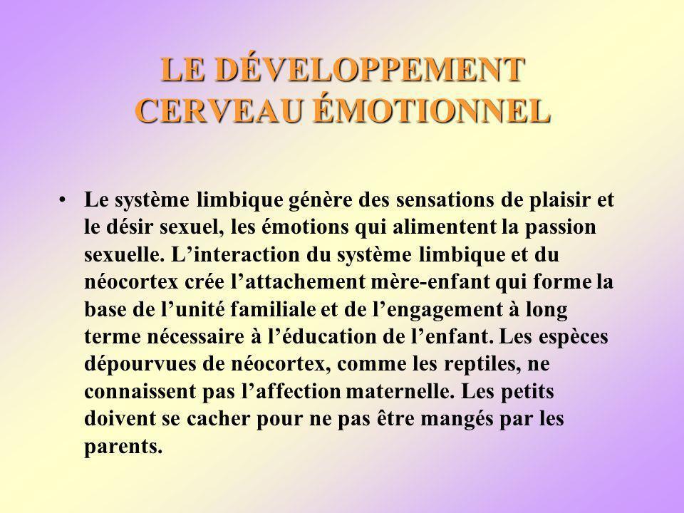 LE DÉVELOPPEMENT CERVEAU ÉMOTIONNEL Le système limbique génère des sensations de plaisir et le désir sexuel, les émotions qui alimentent la passion sexuelle.