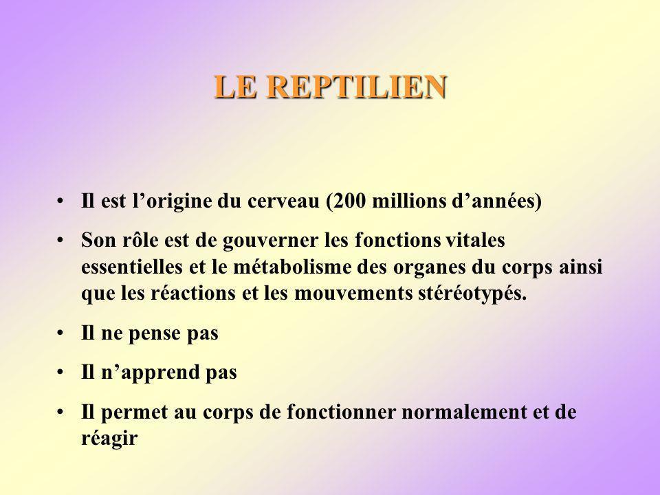 LE REPTILIEN Il est lorigine du cerveau (200 millions dannées) Son rôle est de gouverner les fonctions vitales essentielles et le métabolisme des organes du corps ainsi que les réactions et les mouvements stéréotypés.