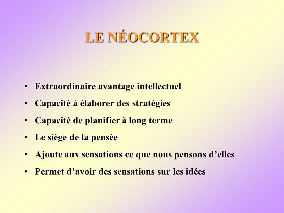 LE NÉOCORTEX Extraordinaire avantage intellectuel Capacité à élaborer des stratégies Capacité de planifier à long terme Le siège de la pensée Ajoute aux sensations ce que nous pensons delles Permet davoir des sensations sur les idées