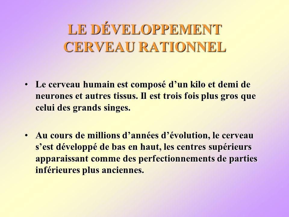 LE DÉVELOPPEMENT CERVEAU RATIONNEL Le cerveau humain est composé dun kilo et demi de neurones et autres tissus.