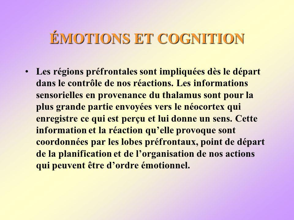 ÉMOTIONS ET COGNITION Les régions préfrontales sont impliquées dès le départ dans le contrôle de nos réactions.