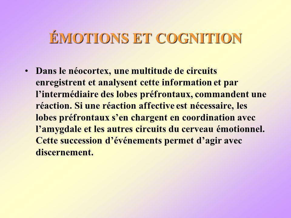 ÉMOTIONS ET COGNITION Dans le néocortex, une multitude de circuits enregistrent et analysent cette information et par lintermédiaire des lobes préfrontaux, commandent une réaction.