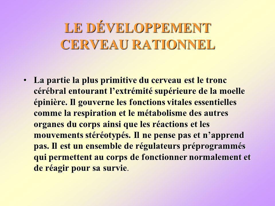 LE DÉVELOPPEMENT CERVEAU RATIONNEL La partie la plus primitive du cerveau est le tronc cérébral entourant lextrémité supérieure de la moelle épinière.