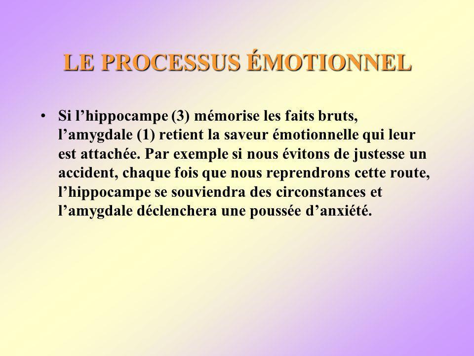 LE PROCESSUS ÉMOTIONNEL Si lhippocampe (3) mémorise les faits bruts, lamygdale (1) retient la saveur émotionnelle qui leur est attachée.