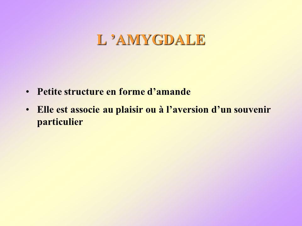 L AMYGDALE Petite structure en forme damande Elle est associe au plaisir ou à laversion dun souvenir particulier