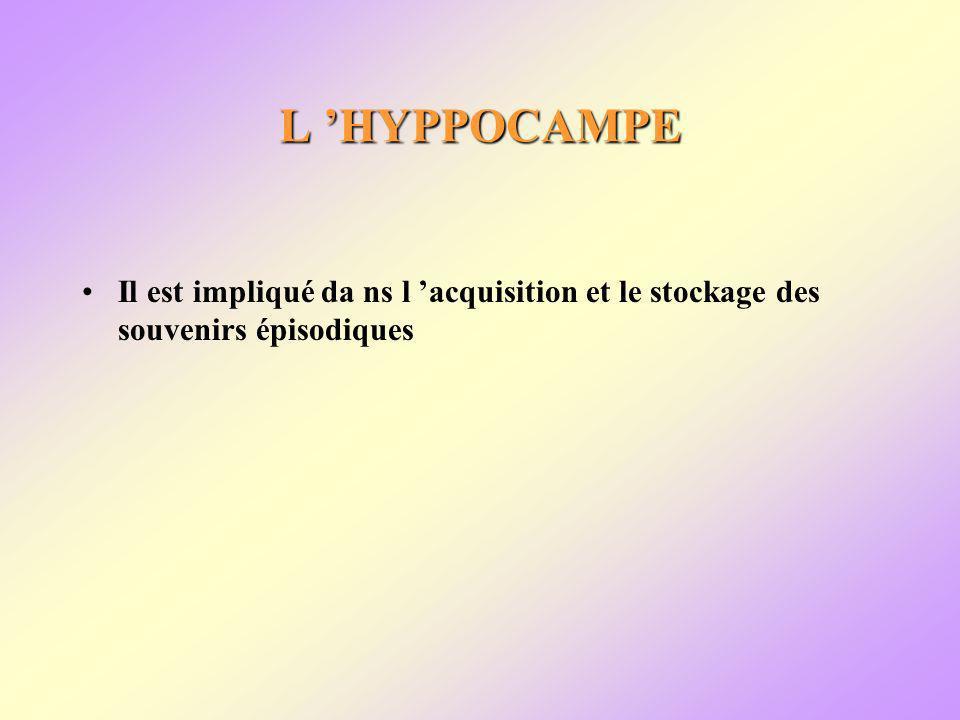 L HYPPOCAMPE Il est impliqué da ns l acquisition et le stockage des souvenirs épisodiques