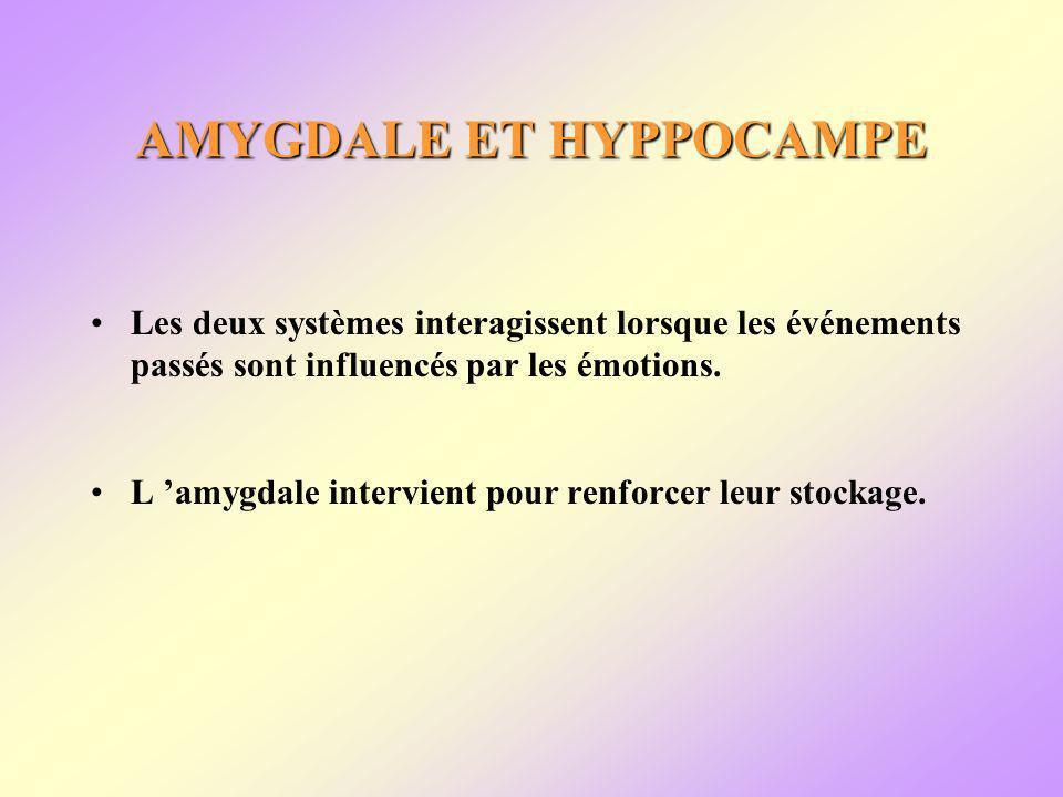 AMYGDALE ET HYPPOCAMPE Les deux systèmes interagissent lorsque les événements passés sont influencés par les émotions.