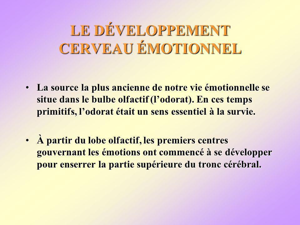 LE DÉVELOPPEMENT CERVEAU ÉMOTIONNEL La source la plus ancienne de notre vie émotionnelle se situe dans le bulbe olfactif (lodorat).