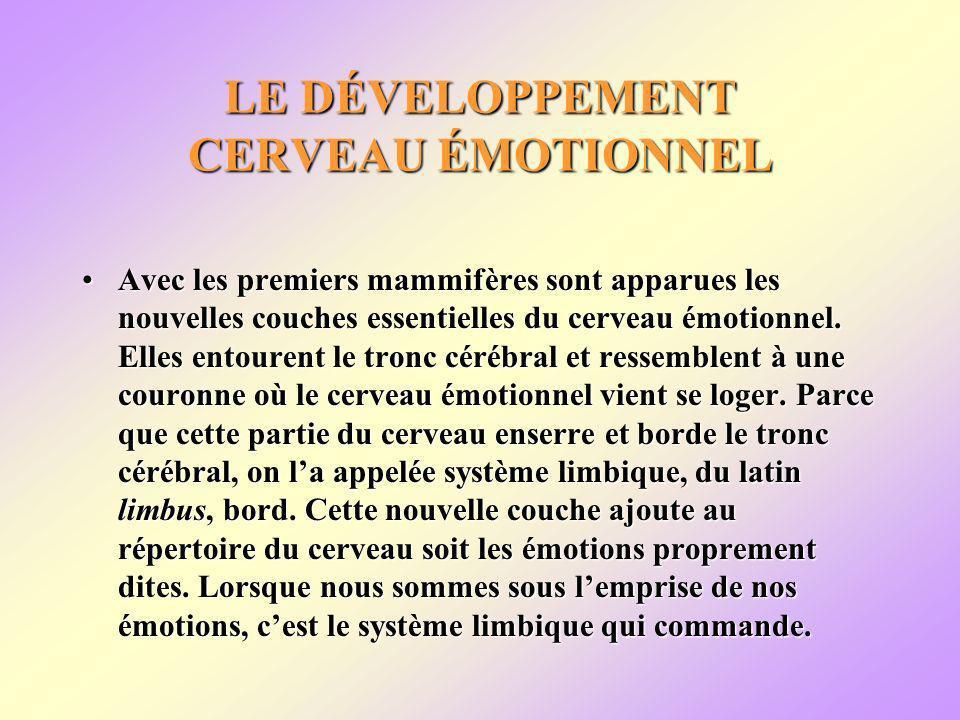 LE DÉVELOPPEMENT CERVEAU ÉMOTIONNEL Avec les premiers mammifères sont apparues les nouvelles couches essentielles du cerveau émotionnel.