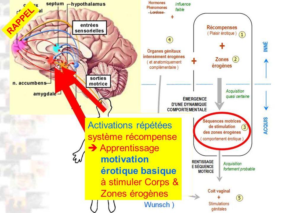 D52 : Modèles : Homme 10 : Renforcement 2 RAPPEL Activations répétées système récompense Apprentissage motivation érotique basique à stimuler Corps & Zones érogènes