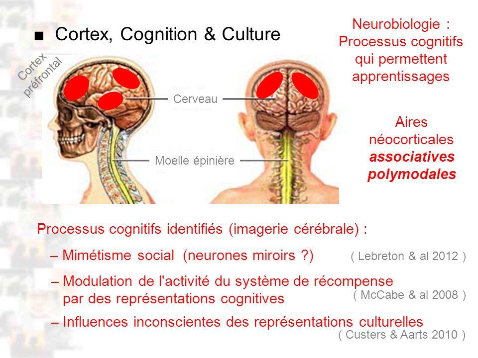 D94 : Modèles : Homme 20 : Développement & Dynamique 18 Neurobiologie : Processus cognitifs qui permettent apprentissages Cerveau Moelle épinière Aires néocorticales associatives polymodales Cortex préfrontal Cortex, Cognition & Culture – Influences inconscientes des représentations culturelles ( McCabe & al 2008 ) ( Custers & Aarts 2010 ) ( Lebreton & al 2012 ) Processus cognitifs identifiés (imagerie cérébrale) : – Modulation de l activité du système de récompense par des représentations cognitives – Mimétisme social (neurones miroirs )